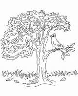 Sitting Hoopoe Colouring Coloringwizards Topcoloringpages sketch template