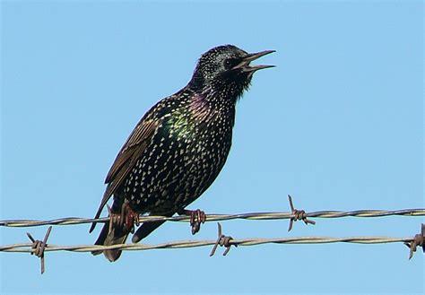 how to deter aggressive birds birdhousesupply com