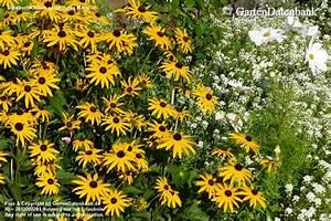 Welche Blumen Blühen Im August : garten im august was bl ht im august bilder praxis tipps ~ Orissabook.com Haus und Dekorationen