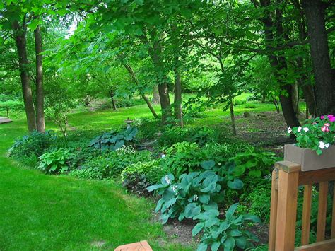 shade trees for small gardens full shade gardens full shade accordions shutters blog hr