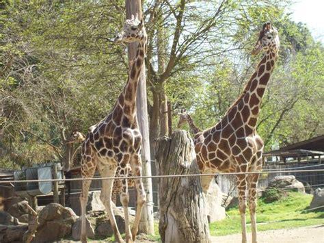 fresno chaffee zoo ca top tips    tripadvisor
