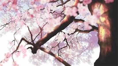 Blossom Cherry Blossoms Anime Sakura Giphy Flowers