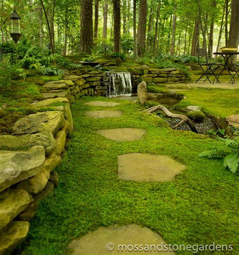 Stepping Stones Garden by Growing Moss Between Stepping Stones Moss And Gardens