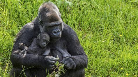 Top 10 Animals That Exhibit Human Behavioral Traits