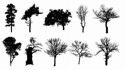 Tree Silhouettes Background Transparent Onlygfx