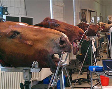 duerr medical cr  vet orale zahn extraktion  pferd