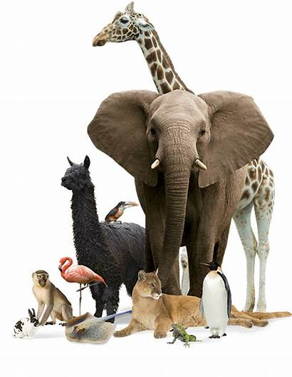Animals Exotic Animal Species Feed Special Let