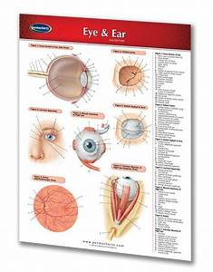 Eye  U0026 Ear - Medical Quick Reference Guide