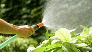 Pflanzen Bewässern Urlaub : gartenbew sserung hinweise und tipps zu ~ Michelbontemps.com Haus und Dekorationen