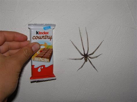 araignee dans la maison grosse grosse araigne bouboule