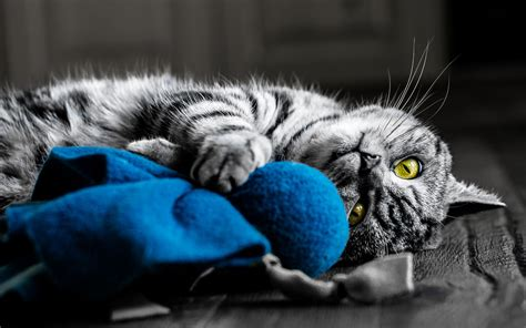 Cat Full Hd Wallpaper And Background Image 1920x1200