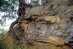 (WES12) Mechanical weathering caused by root growth. photo ...