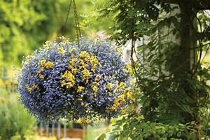 Ampelpflanzen Und Hängepflanzen Garten : h ngepflanzen f r blumenampeln 10 ampelpflanzen ideen ~ Buech-reservation.com Haus und Dekorationen