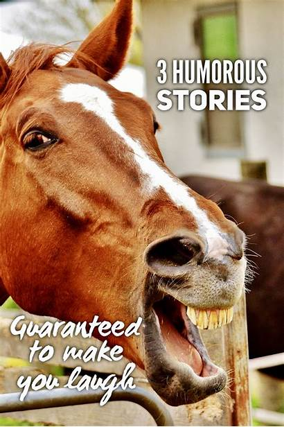 Stories Humorous Laugh Guaranteed Southwest Fly