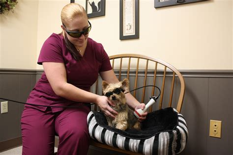 There have been more than 130 incidents of unexplained brain injury known as havana syndrome among us diplomats, spies and defence officials, some of. Laser Therapy   Services   Veterinary Care of Cuba