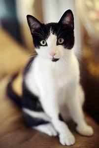 Our Cat Oreo
