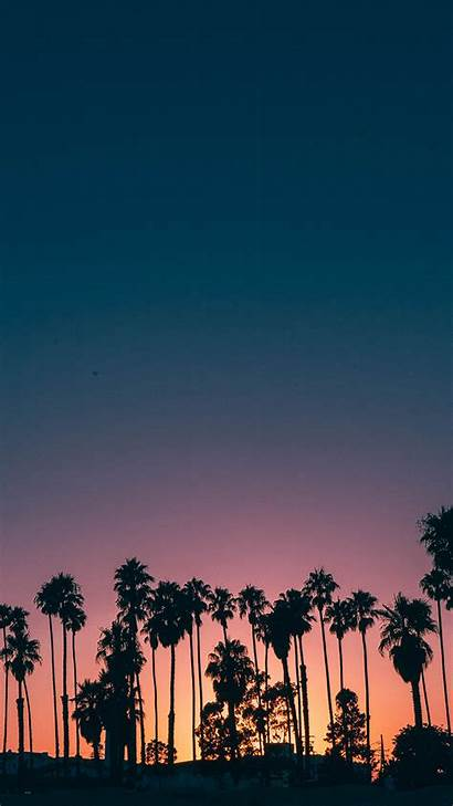 Iphone Palm Tree Wallpapers Tropical Coconuts Let