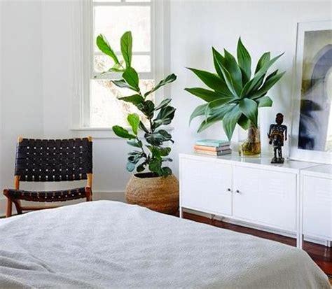 plante verte chambre une plante dans une chambre c 39 est dangereux