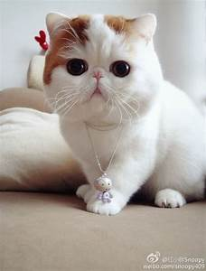 Chinese fashion blogging sensation Snoopy the cat opens up ...