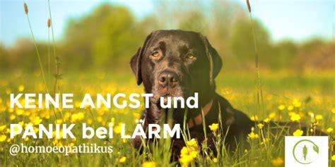 Bachblüten Hunde Dosierung