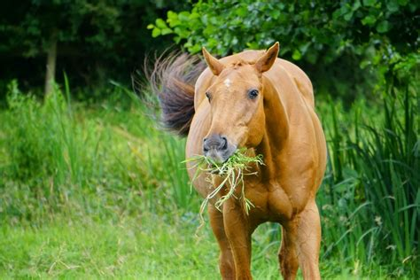 pasture horse seed mix choose horses hay