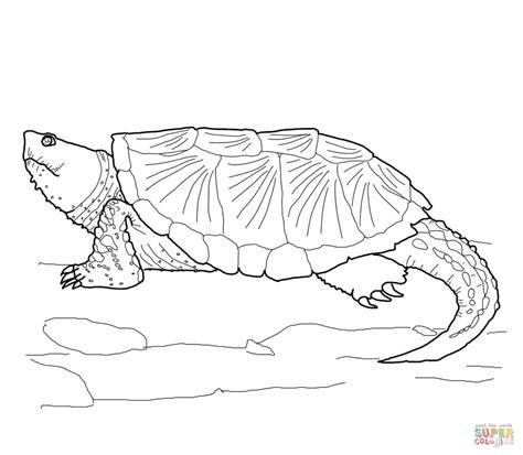coloriage tortue serpentine coloriages 224 imprimer gratuits