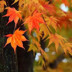 Trees, With, Great, Fall, Foliage, U2014, The, Family, Handyman