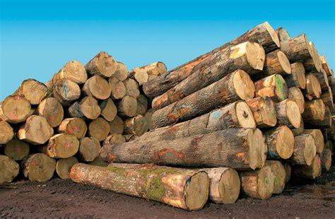 le en bois flotté constructions neuves obligation de quantit 233 minimale de bois vivre ma maison