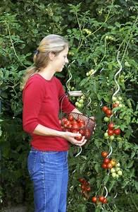 Gurken Anbauen Im Topf : 10 tipps f r den anbau von tomaten garten ~ Frokenaadalensverden.com Haus und Dekorationen