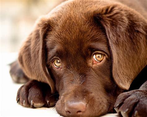Innocent Puppy Eyes X