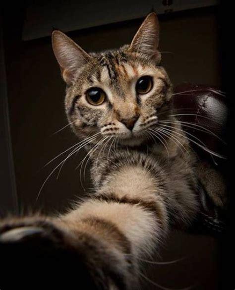 de las mejores selfies  animales  personas