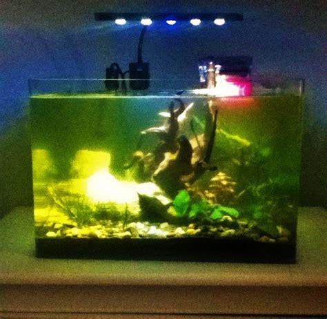 probl 232 me aquarium avec l eau trouble jaune verte