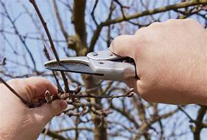 Apfelbaum Schneiden Anleitung : apfelbaum schneiden jetzt wird 39 s konkret ~ Eleganceandgraceweddings.com Haus und Dekorationen