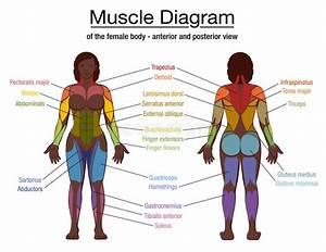 Muscle Diagram Black Woman Female Body Names Stock Vector