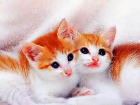sweet cat sweet cats wallpapers litle pups