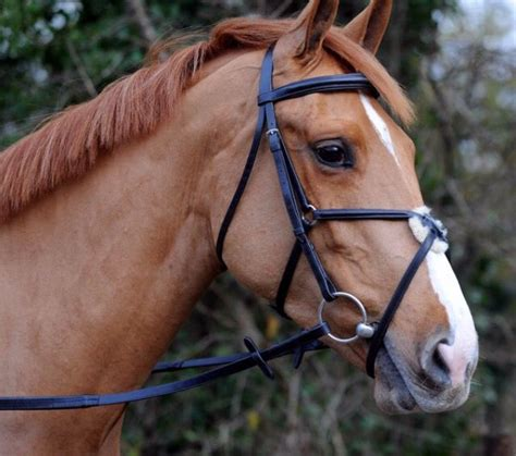 bridle horse chestnut english jumping cross country tack figure teke akhal horses equestrian