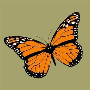 Schmetterling Am Kinderbett : schmetterling im app store ~ Lizthompson.info Haus und Dekorationen