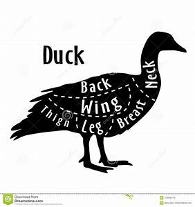 Cut Of Duck  Diagram For Butcher  Poster For Butcher Shop