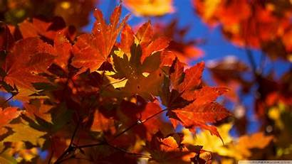 Leaves Autumn Wallpapers Fall Leaf