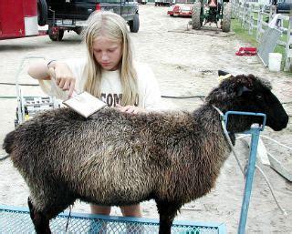 colored sheep sheep 101
