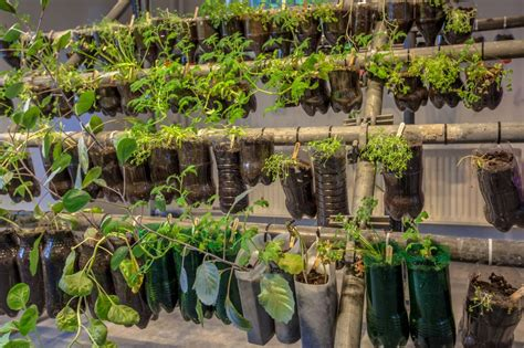 Best Windowsill Vegetables by Tips For Starting A Hanging Basket Garden Agnet West