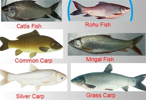 composite fish culture information guide agri farming