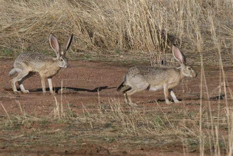 Mammals In Colorado During Focus On Nature Tours