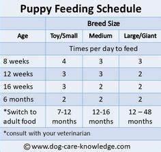 Feeding Your Labrador Puppy Desert Puppies Labrador