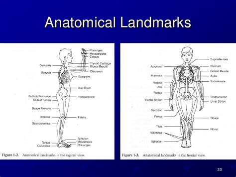 anthropometry pps