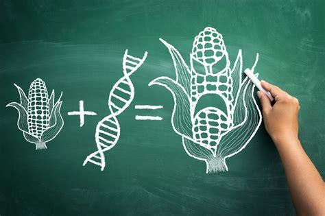 Alimenti Geneticamente Modificati Stiamo Mangiando Ogm A Nostra Insaputa Ecco La Lista Di
