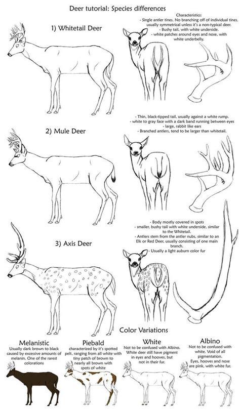 pin  jenny pederson  drawing drawings animal