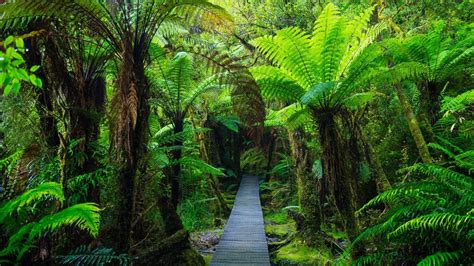 Beach Sand Background Images Wooden Footpath In Dense Jungle Westland National Park New Zealand South Island Windows 10