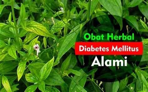 obat herbal diabetes alami nayakon