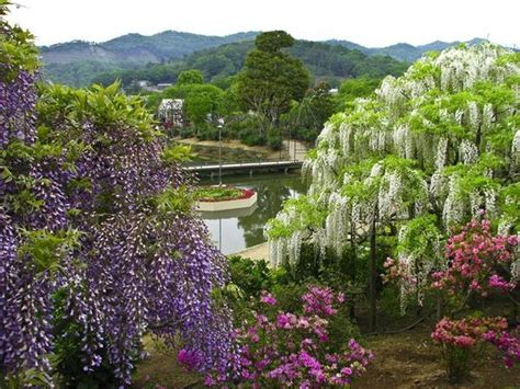 flower park in tokyo beautiful ashikaga flower park japan general interest reading baselios church digital library